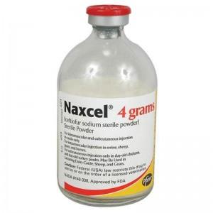 Naxcel 4 gram